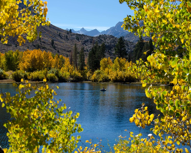 Eastern Sierra Fall Colors 2014