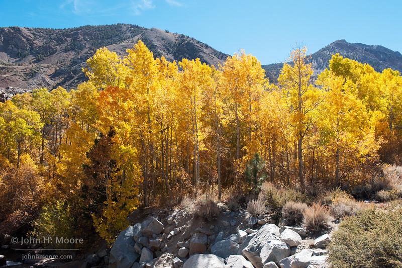 Aspens turn color along Bishop Creek.  Eastern Sierra, California, USA.