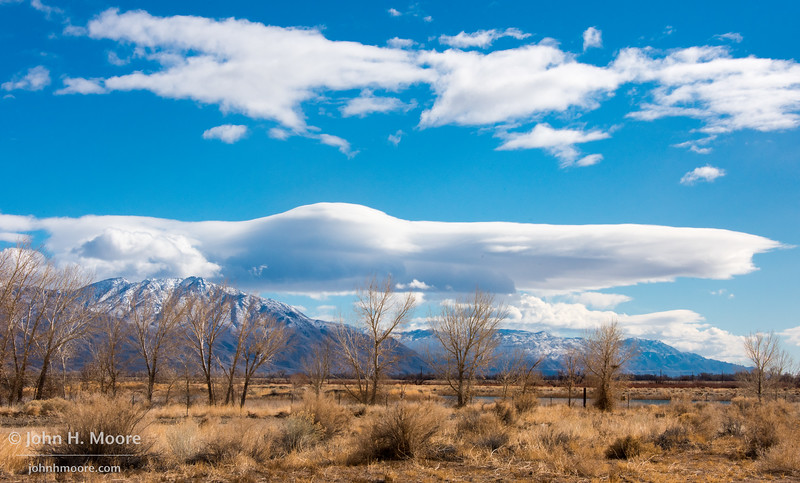 Trees and cloud outside of Bishop, California