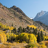 Aspens turning color in fall along June Lake Loop in the Eastern Sierra, California, USA