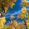Fall color in the Eastern Sierra.  McGee Creek, California, USA.