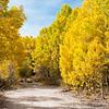 A road in the autumn woods.  Cardinal Village Resort, near Aspendell, California, USA.
