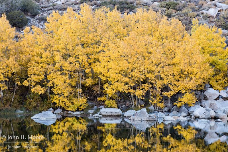 Yellow-orange aspens reflect in a fishing pond near Cardinal Village Resort.  Aspendell, California, USA