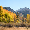 Fall color in Surveyor's Meadow along Bishop Creek in the Eastern Sierra, California, USA