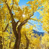 Fall color along McGee Creek.  Eastern Sierra, California, USA.