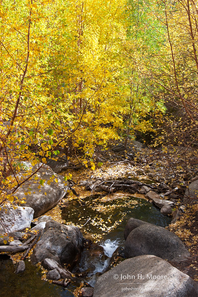 Fall leaves swirl in a small pool in a creek near Aspendell, California, USA.
