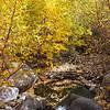 Fall leaves swirl in a small pool in a creek near Aspendell, California, USA.