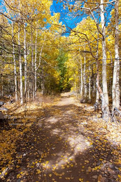 A path in autumn woods.  Near Aspendell, California, USA.