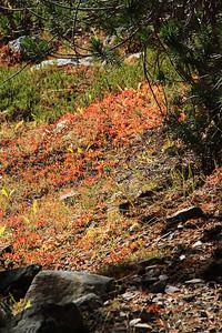 eastern Sierras Oct2014  363