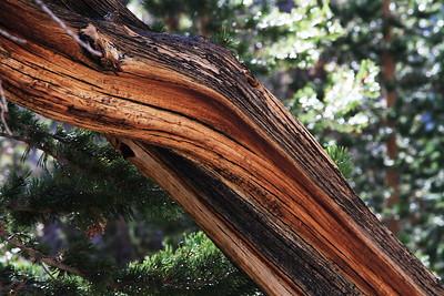 eastern Sierras Oct2014  362