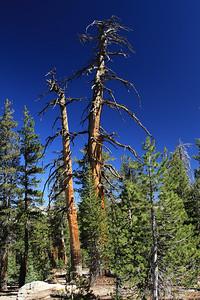 eastern Sierras Oct2014  043