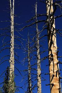 eastern Sierras Oct2014  033