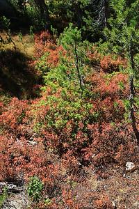 eastern Sierras Oct2014  017