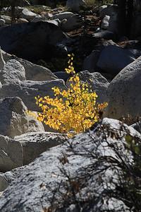 eastern Sierras Oct2014  024