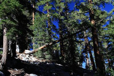 eastern Sierras Oct2014  015