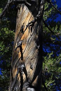 eastern Sierras Oct2014  031