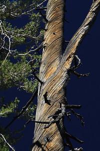 eastern Sierras Oct2014  032