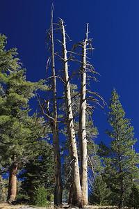 eastern Sierras Oct2014  039
