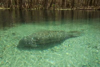 2015 - Ichetucknee Springs, FL