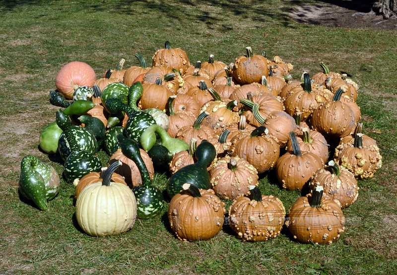 PA-CPS-2020.9.23#1788.3. Unusual Pumpkin's and Gourds. Cookie's Pumpkin Stand near Catawissa, Columbia County Pennsylvania.