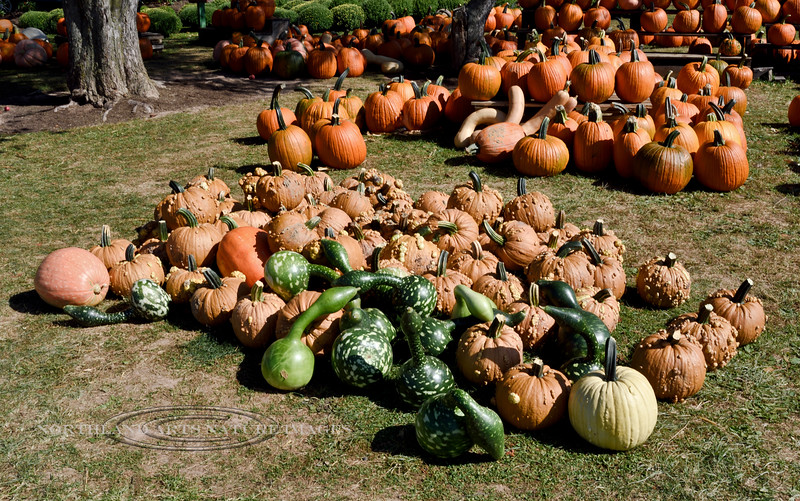 PA-CPS-2020.9.23#1784.3. Avariety of Pumpkin's and Gourd's at Cookie's Pumpkin Stand near Catawissa, Columbia County Pennsylvania.