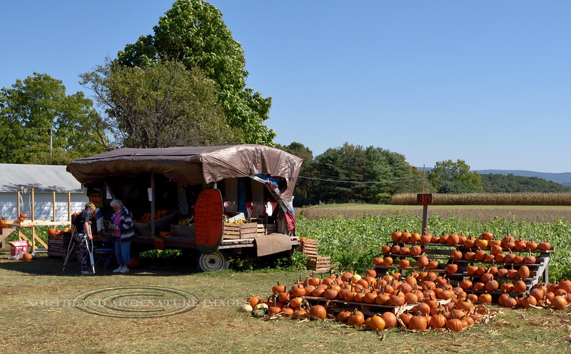 PA-CPS-2020.9.23#1780.2. Cookie's Pumpkin Stand. Pumpkin Country near Catawissa, Columbia County Pennsylvania.