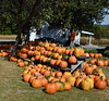 PA-CPS-2020.9.23#1789.3. Cookie's Pumpkin Stand near Catawissa, Columbia County Pennsylvania.
