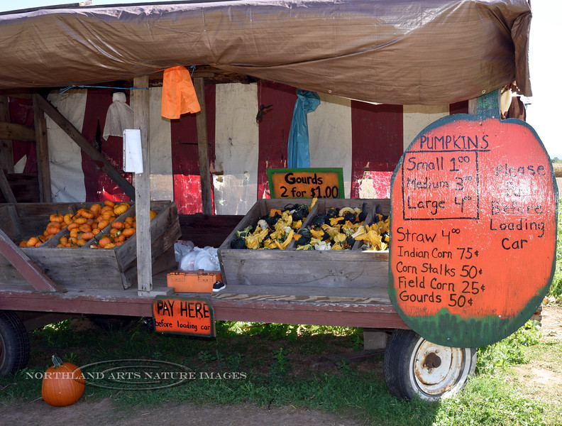 PA-CPS-2020.9.23#1781.2. Cookie's Pumpkin Stand. Pumpkin Country near Catawissa, Columbia County Pennsylvania.