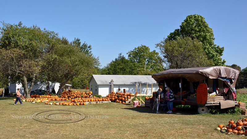 PA-CPS-2020.9.23#1779.3. Cookie's famous roadside Pumpkin Stand. Pumpkin Country near Catawissa, Columbia County Pennsylvania.
