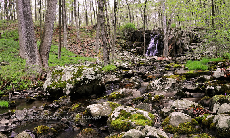 PA-2008.4.26#100.2. Rapp Creek Falls, Bucks County, Pennsylvania.