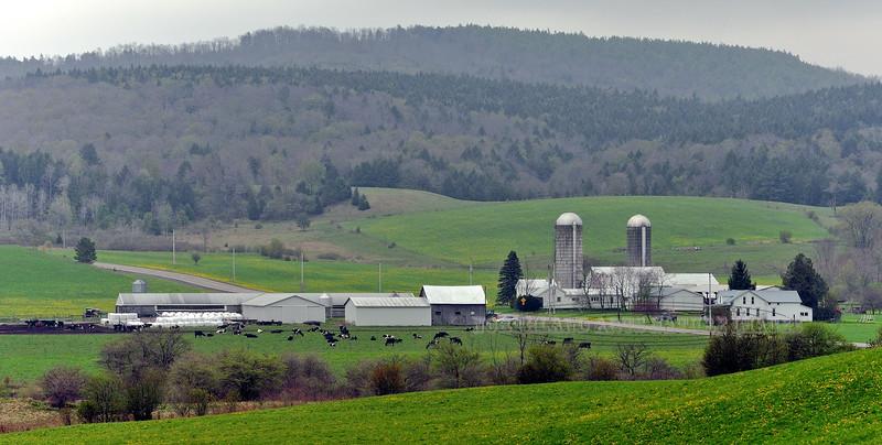 NY-2012.5.2#054. Dairy Farm. Chenango County, New York.