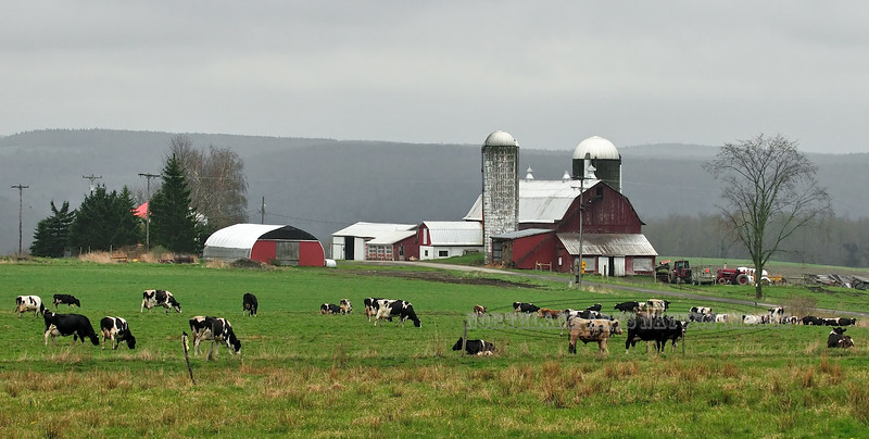 NY-2012.5.1#048-Dairy Farm, Chenango County, New York.