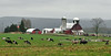 NY-Dairy Farm, Chenango County, New York. #51.048. 1x2 ratio format.