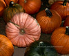 PA-CPS-2020.9.23#1791.3. This pink Pumpkin is a fairly new hybrid grown from Porcelian Doll Pumpkin seed. Cookie's Pumpkin Stand near Catawissa, Columbia County Pennsylvania.