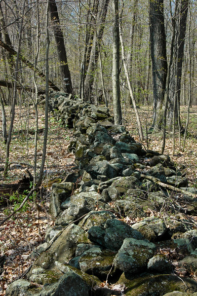 PA-2008.4.22#655.1x. A vintage early American rock wall common still today throughout Penn's Woods. When William Penn deeded land to the colonists they marked their boundaries with these stone walls. Bucks County Pennsylvania.