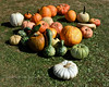 PA-CPS-2020.9.23#1785.2. A close up of Cookie's Pumpkin's and Gourds. Cookie's Pumpkin Stand near Catawissa, Columbia County Pennsylvania.