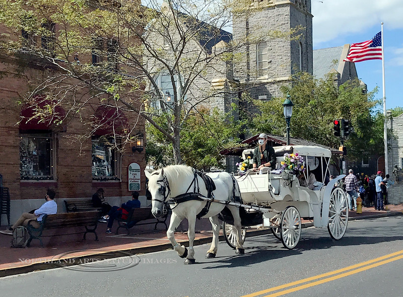 NJ-2020.9.19#0028.4. Horse and carriage in Historic Cape May, New Jersey. Photo by Mary Lou Boughton.