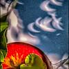 Orbs (Apple Tree Shadows)