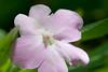 19 Flowers2lavender0861