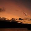 sant fe sunset w-frigates