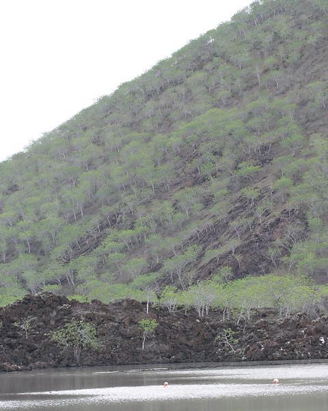 hillside on Floreana