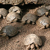 young tortoises at darwin center