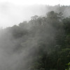 cloud forest 2