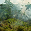 Slash and burn agriculture along the Via Auca oil road in the Ecuadorian Amazon