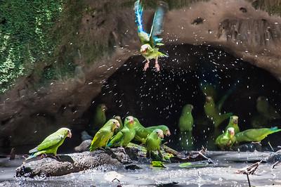 Ecuadorian Bird Collection