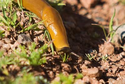 banana slug. He was so cute, I had to take photos from several angles.