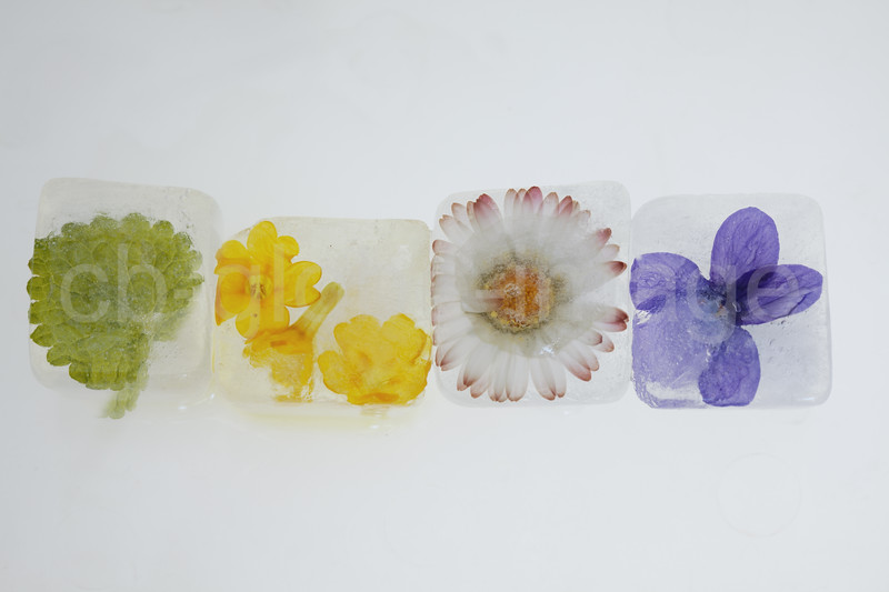Edible plants and flowers