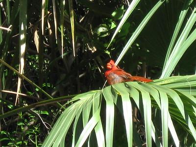 eeler's favorite nature photos