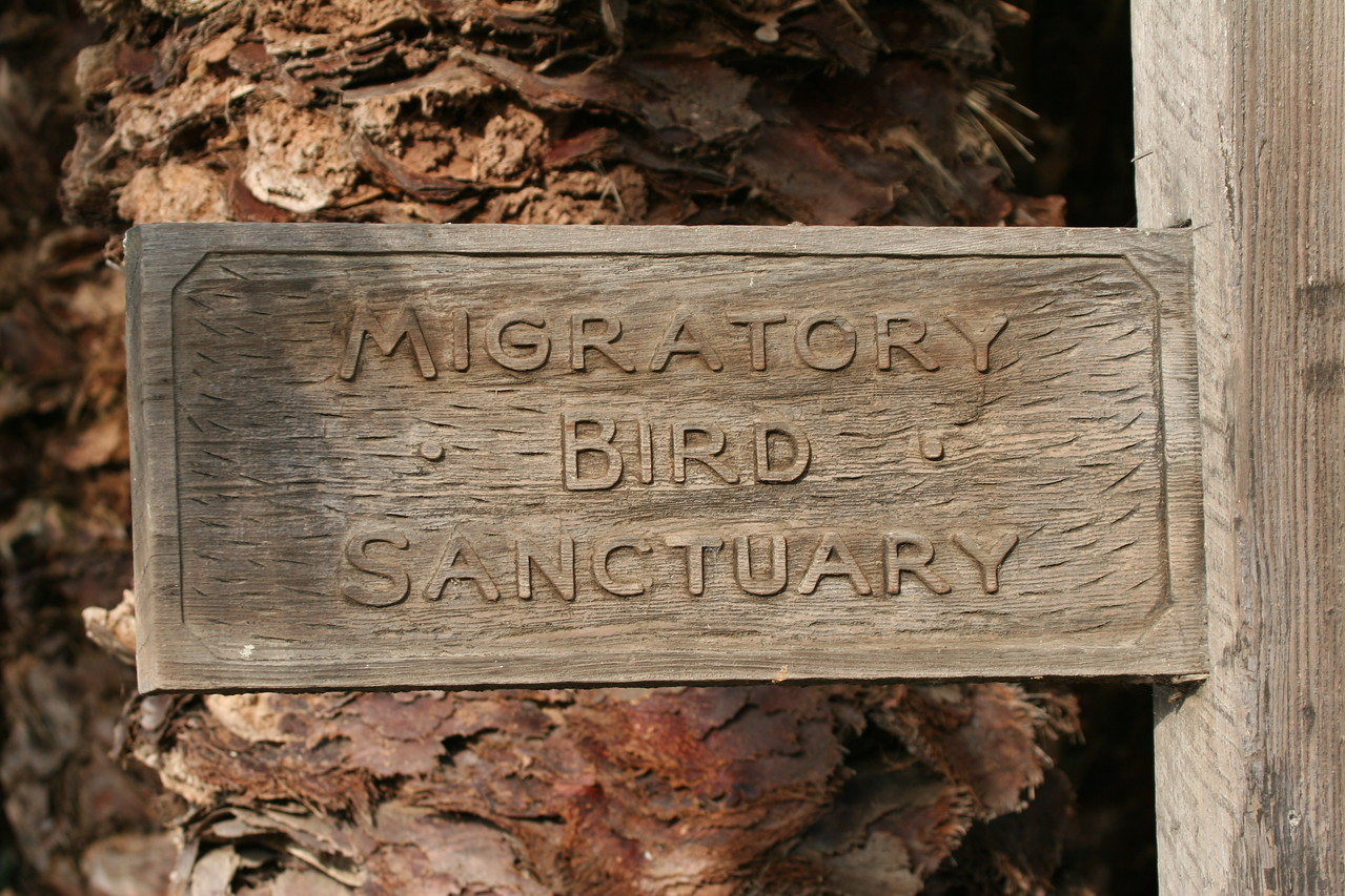 Palo Alto Baylands (Duck Pond)
