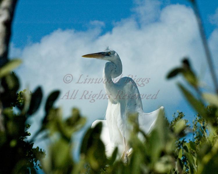 Florida-20080409-0171